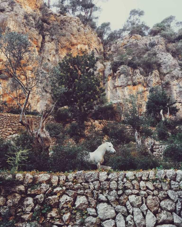 Horse - Majorca