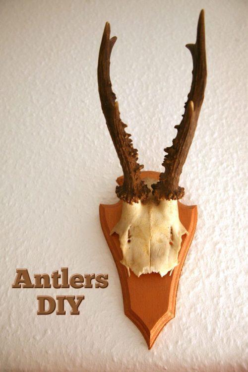 Antler DIY Walldecor